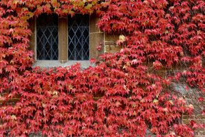 Autumn comes to Canons Ashby