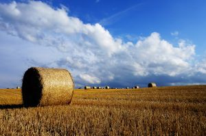 Straw bales and blue skies