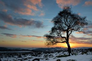 The Tree of Light, Surprise View, Peak District