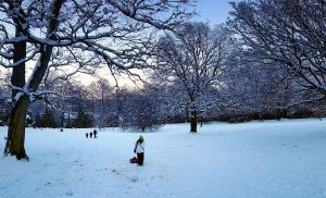 Sledging time in Brincliffe Park, Sheffield