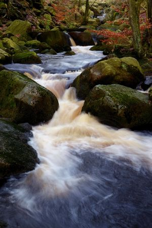 Padley Gorge again - portrait this time