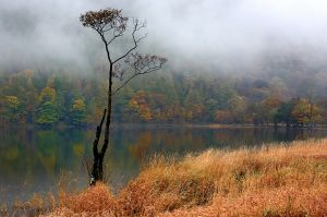 Buttermere tree after a storm